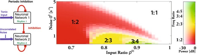 Synchronization by uncorrelated noise: interacting rhythms