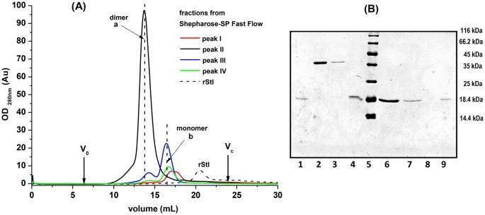 Self-homodimerization of an actinoporin by disulfide