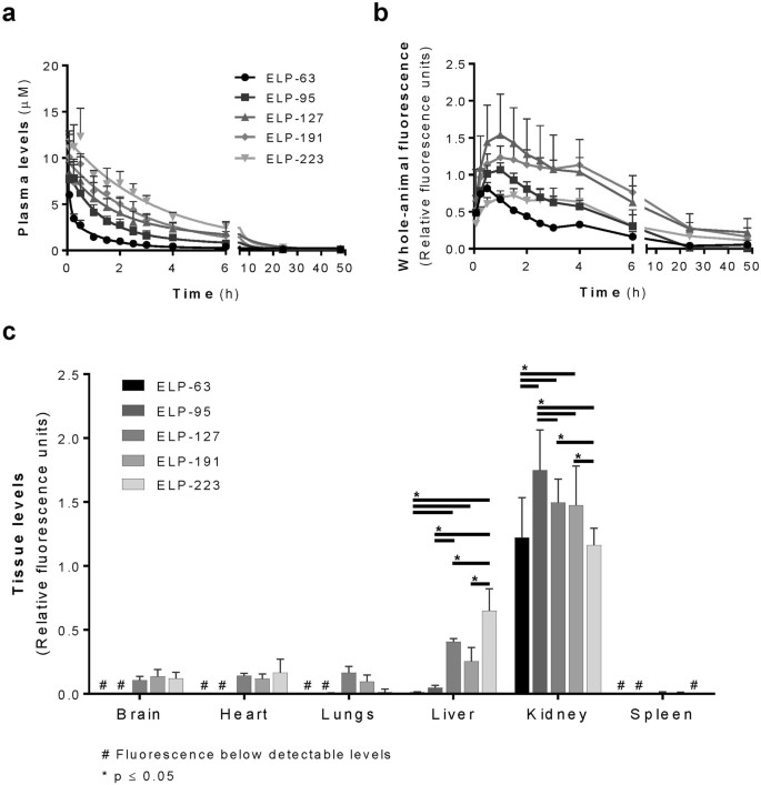 Molecular Size Modulates Pharmacokinetics, Biodistribution