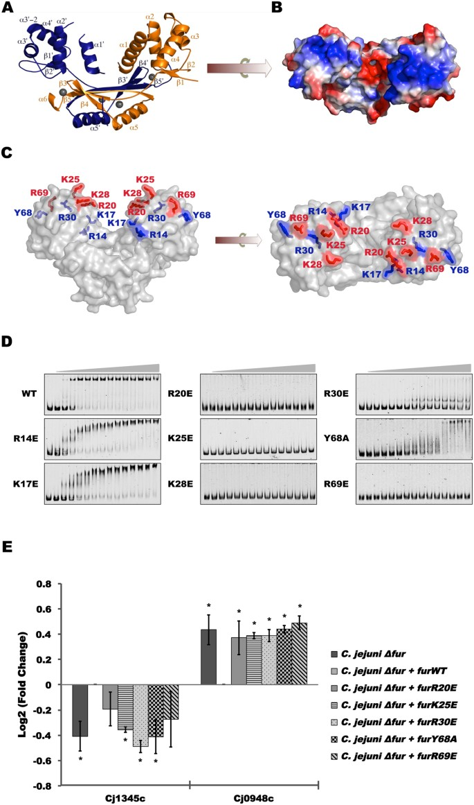 Functional insights into the interplay between DNA