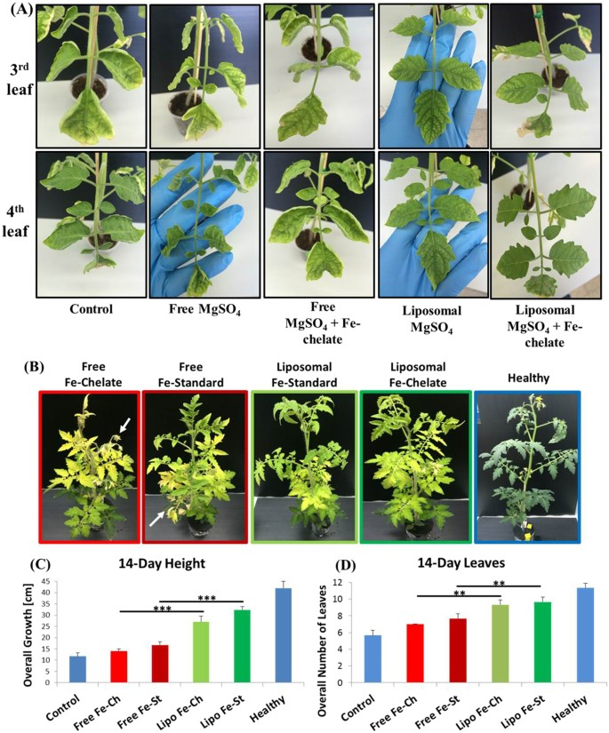 Therapeutic nanoparticles penetrate leaves and deliver nutrients to