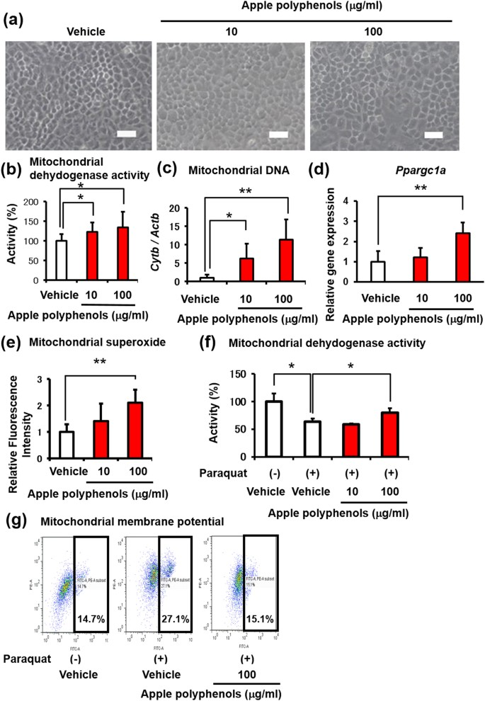 Apple procyanidins promote mitochondrial biogenesis and proteoglycan