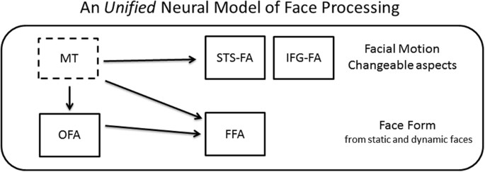 An Integrated Neural Framework for Dynamic and Static Face