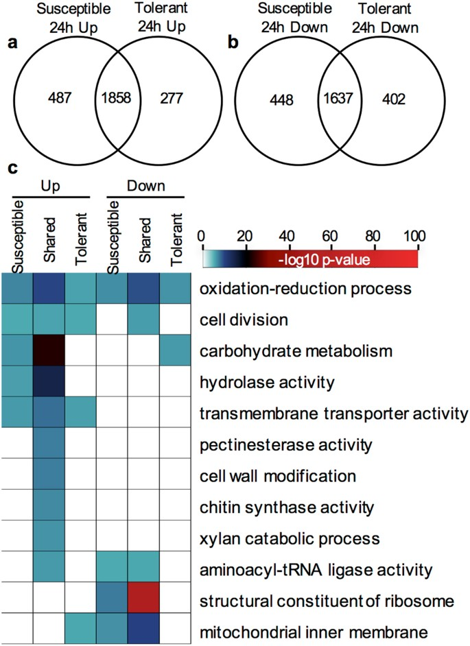 Identification and application of exogenous dsRNA confers