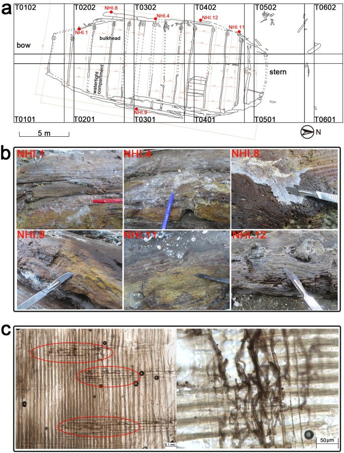 Microbial community analysis and biodeterioration of