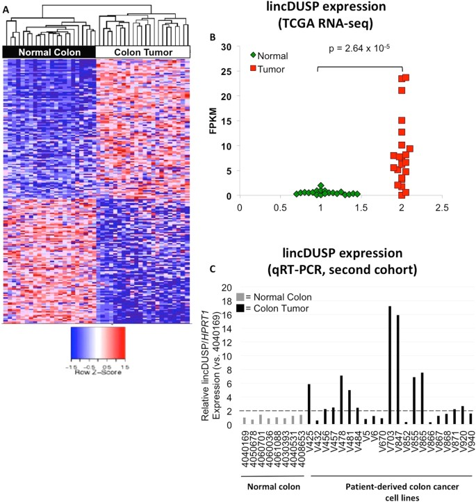Colon Cancer Upregulated Long Non Coding Rna Lincdusp Regulates Cell Cycle Genes And Potentiates Resistance To Apoptosis Scientific Reports