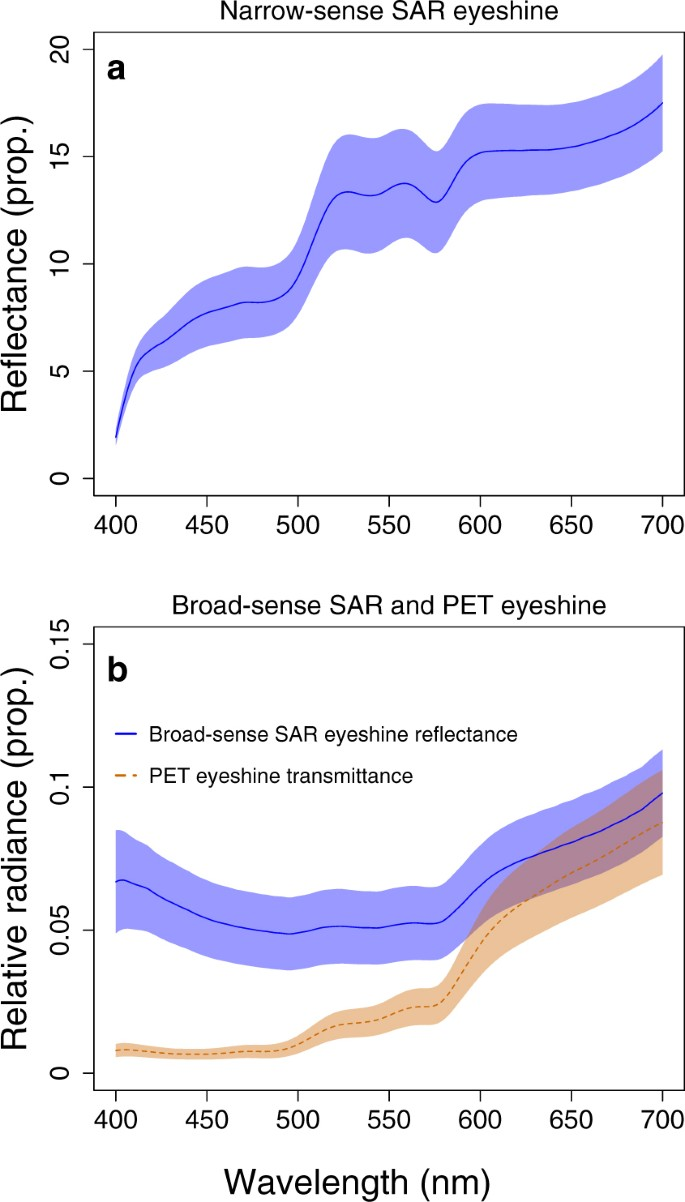 Daytime eyeshine contributes to pupil camouflage in a