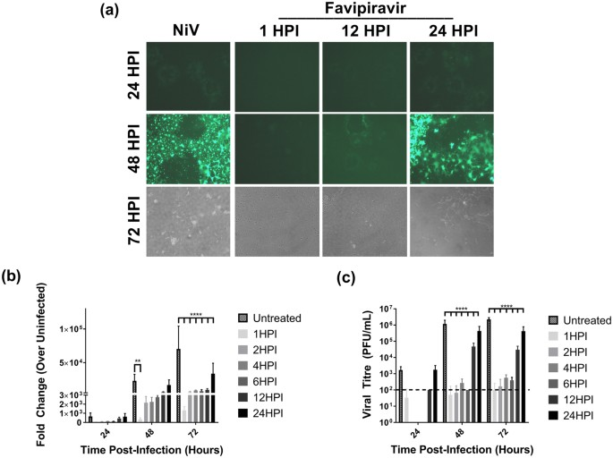 Favipiravir (T-705) protects against Nipah virus infection in the