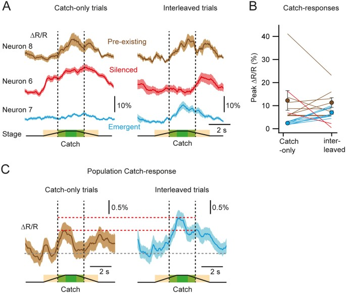 Sensory representation of an auditory cued tactile stimulus