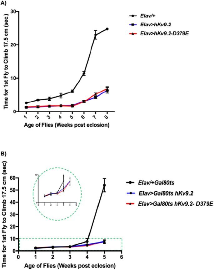A Drosophila Model of Essential Tremor | Scientific Reports