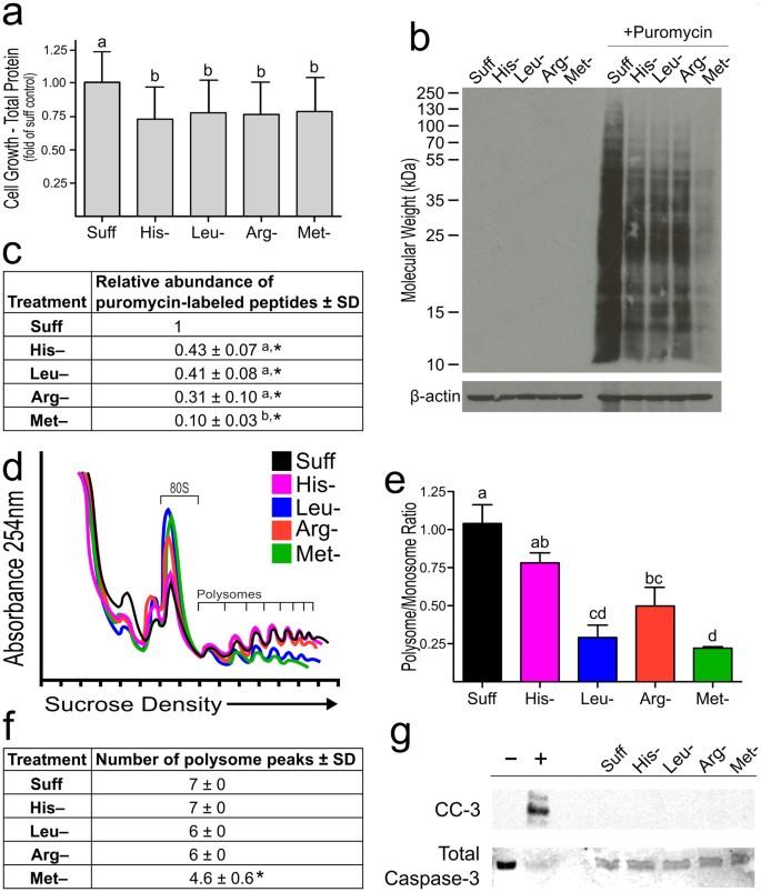 Effects of single amino acid deficiency on mRNA translation