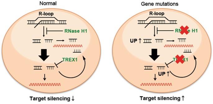 Cytosolic Genomic DNA functions as a Natural Antisense | Scientific