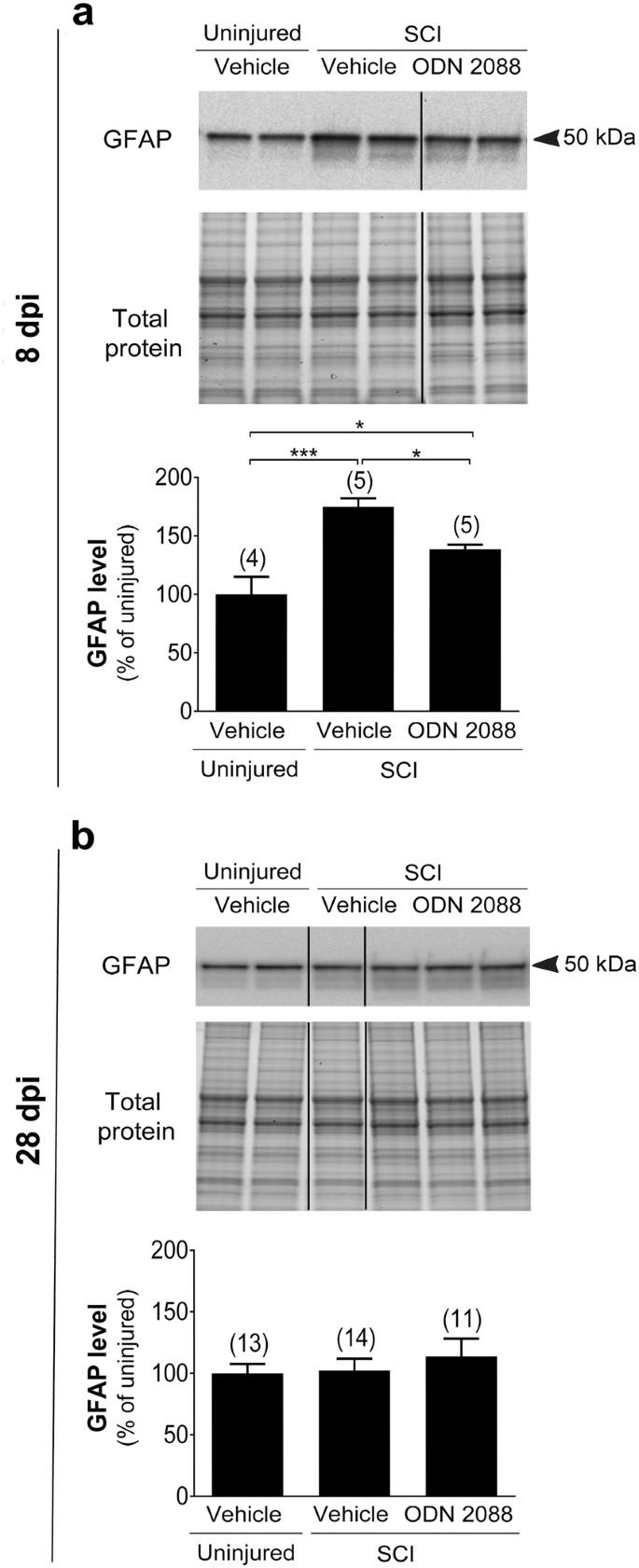 A toll-like receptor 9 antagonist restores below-level glial