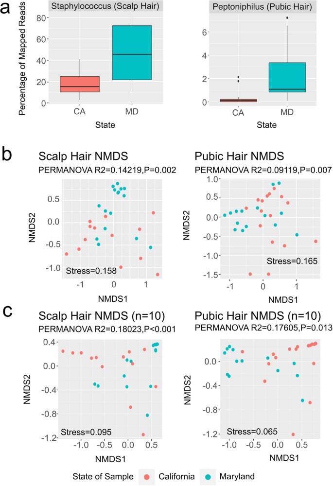 Spatial and Environmental Variation of the Human Hair Microbiota