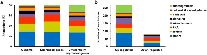 Transcriptome analysis highlights nuclear control of