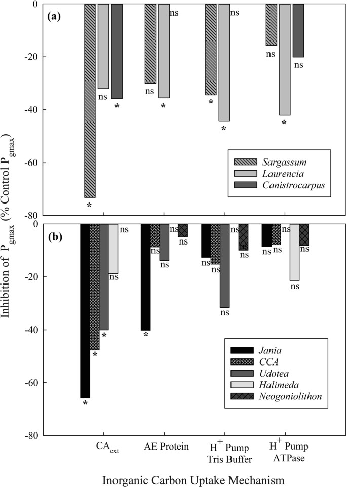 The Role Of Irradiance And C Use Strategies In Tropical