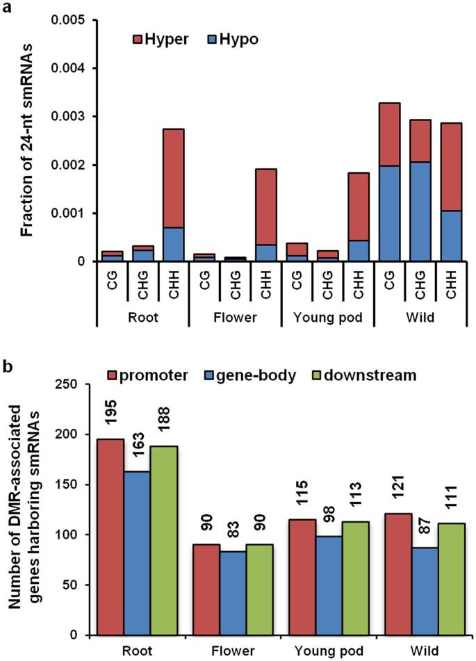 Genome-wide bisulphite-sequencing reveals organ-specific methylation