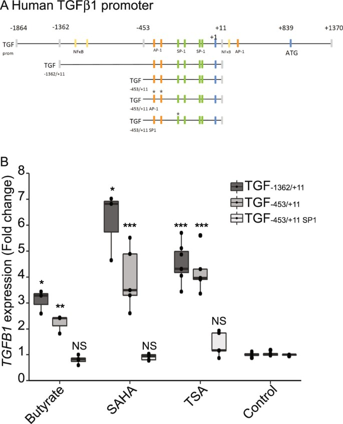 Butyrate produced by gut commensal bacteria activates TGF