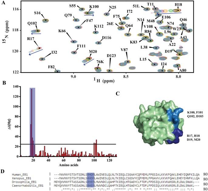 GTP-binding facilitates EB1 recruitment onto microtubules by