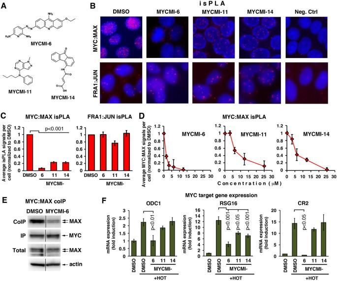 A selective high affinity MYC-binding compound inhibits MYC