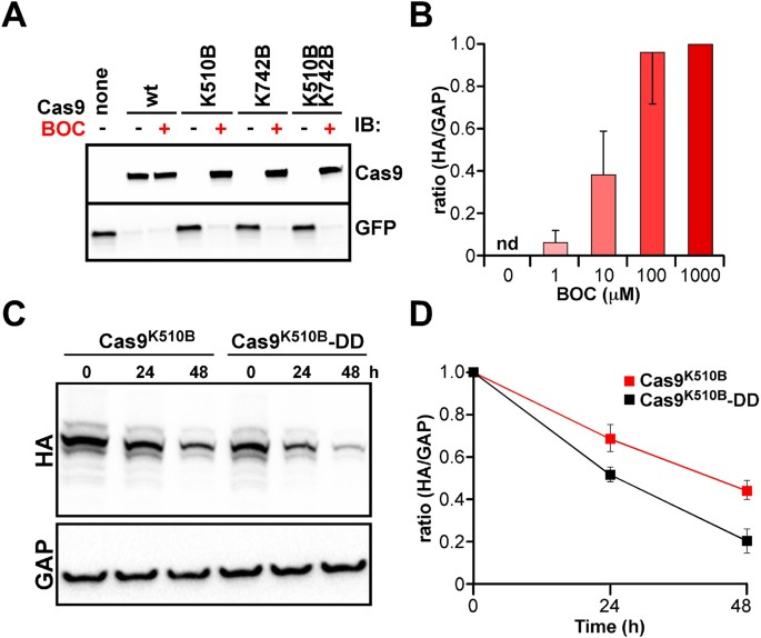 Switchable genome editing via genetic code expansion | Scientific