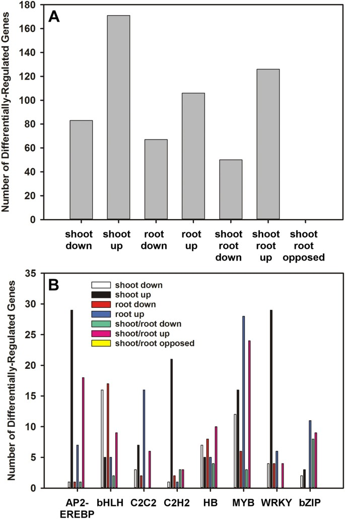 Changes in gene expression in Camelina sativa roots and