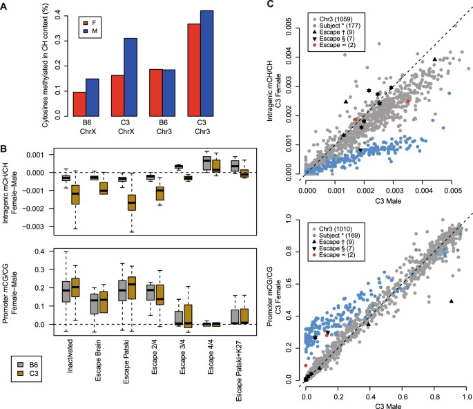 Dosage compensation and DNA methylation landscape of the X