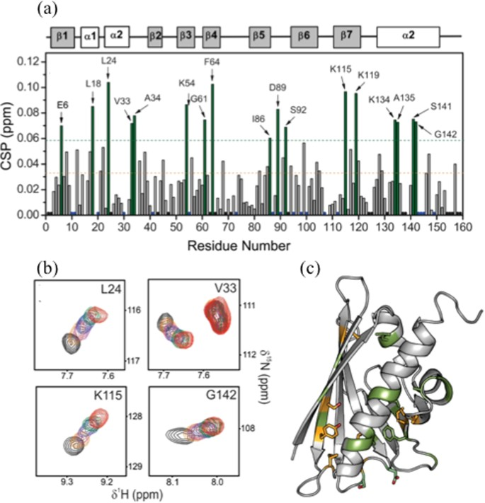 Structural basis for cross-reactivity and conformation