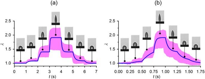 Modeling erythrocyte electrodeformation in response to amplitude