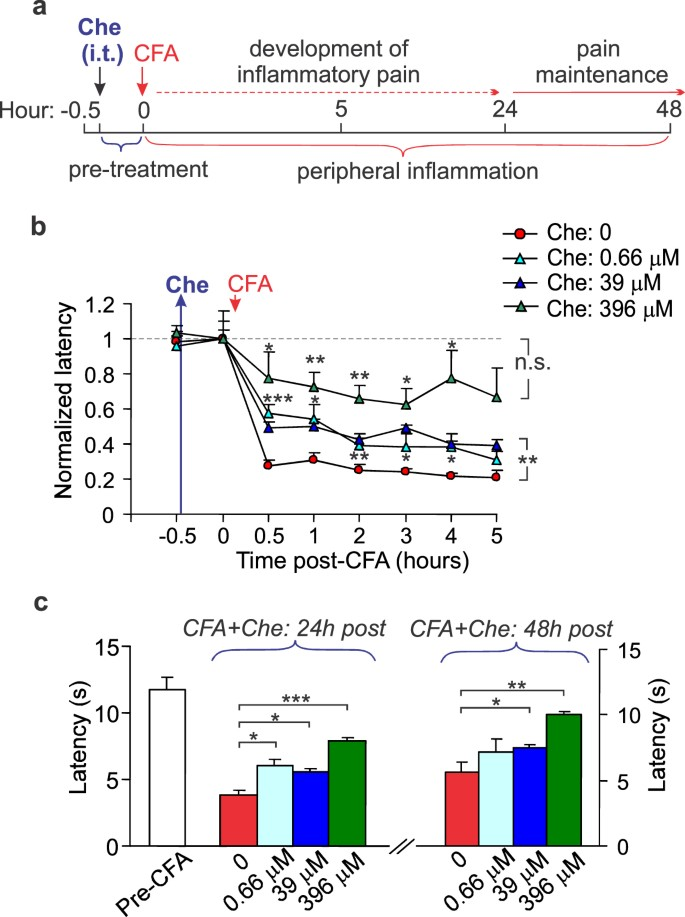 Spinal PKCα inhibition and gene-silencing for pain relief