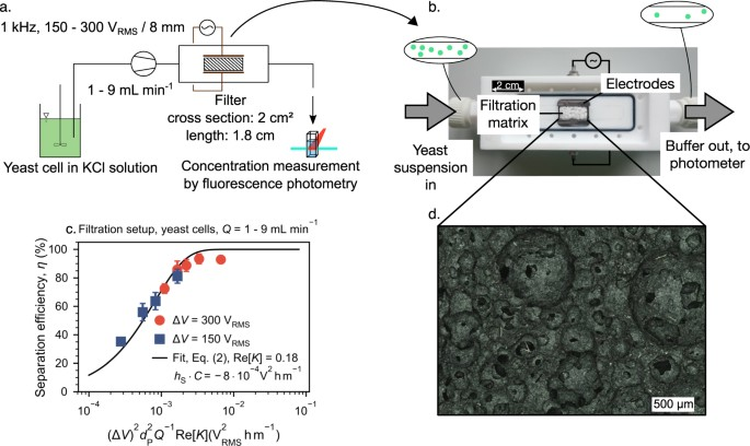 Bridging the scales in high-throughput dielectrophoretic