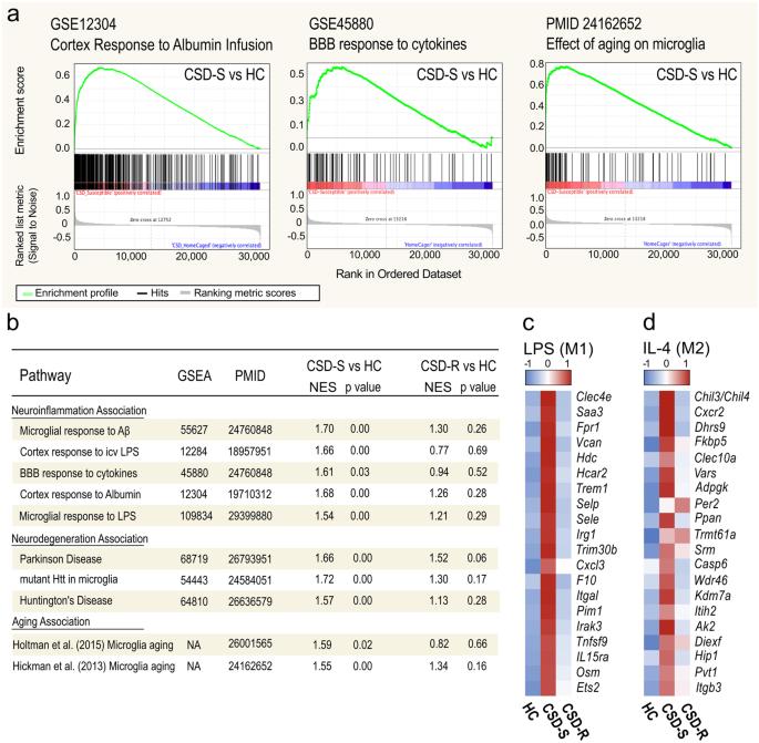 Decoding microglia responses to psychosocial stress reveals