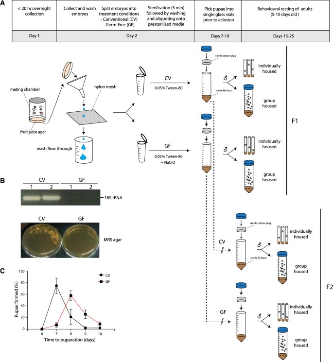 The Drosophila microbiome has a limited influence on sleep
