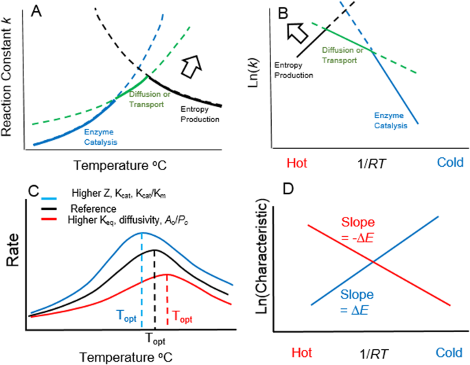 Reaction and diffusion thermodynamics explain optimal
