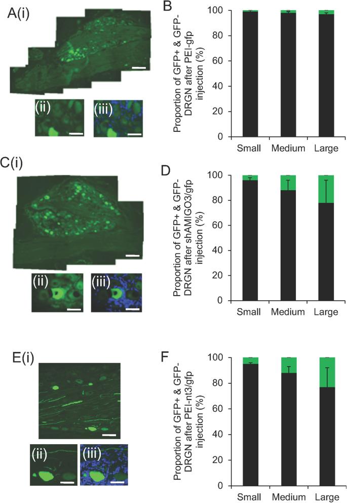 Non-viral-mediated suppression of AMIGO3 promotes