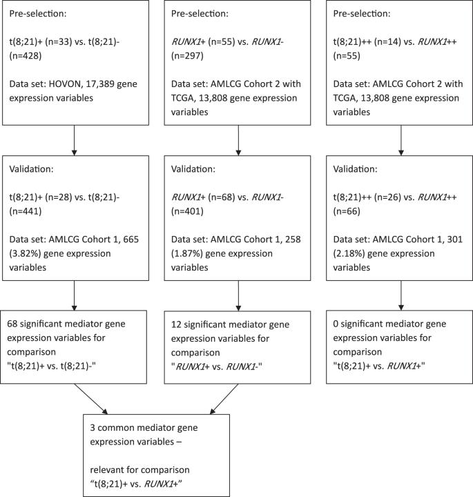 Mediation analysis reveals common mechanisms of RUNX1 point