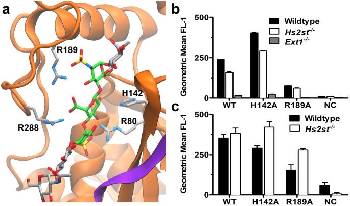 Downstream Products are Potent Inhibitors of the Heparan Sulfate 2-O