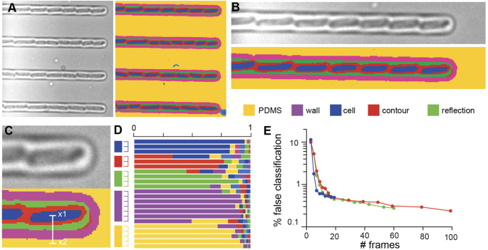 Identification of individual cells from z-stacks of bright-field