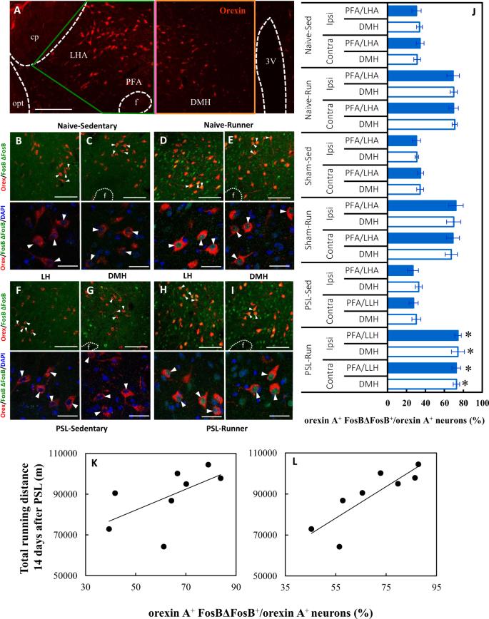 Activation of mesolimbic reward system via laterodorsal