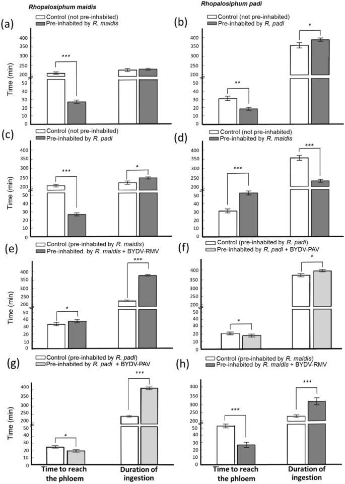 A plant virus (BYDV) promotes trophic facilitation in aphids