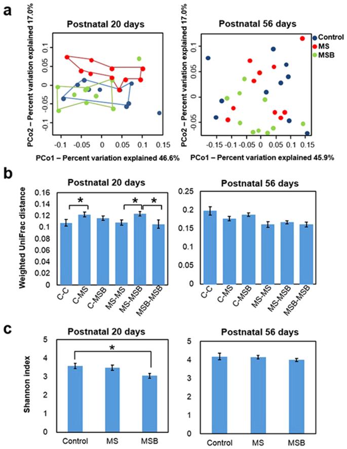 Effect of probiotic Bifidobacterium bifidum G9-1 on the