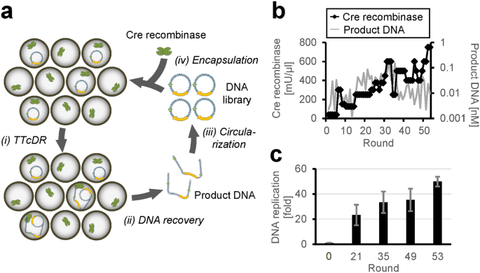 Self-replication of circular DNA by a self-encoded DNA