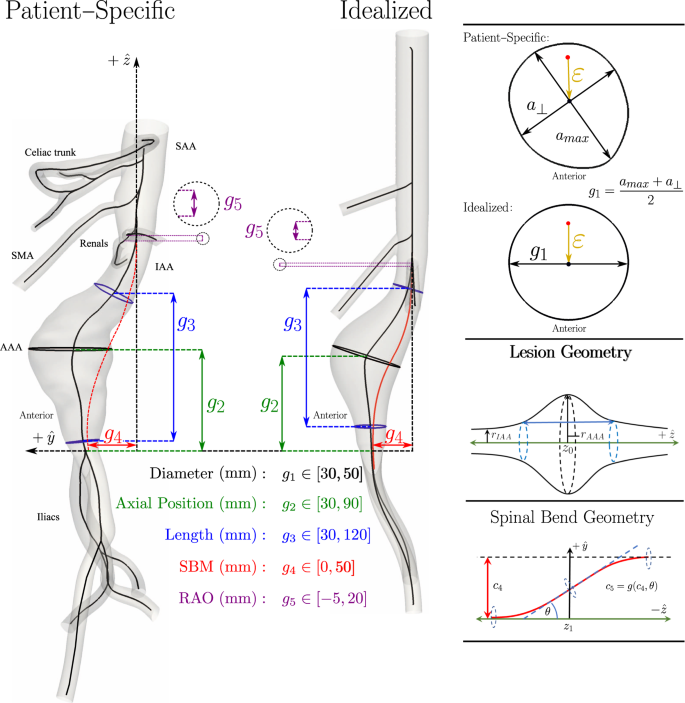 Strongly Coupled Morphological Features of Aortic Aneurysms
