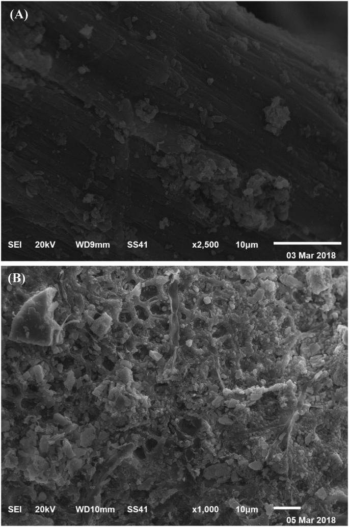 Biosorption optimization, characterization, immobilization