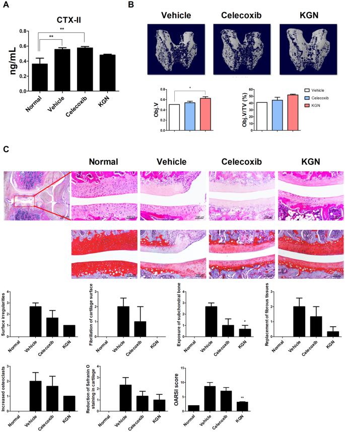 Kartogenin inhibits pain behavior, chondrocyte inflammation