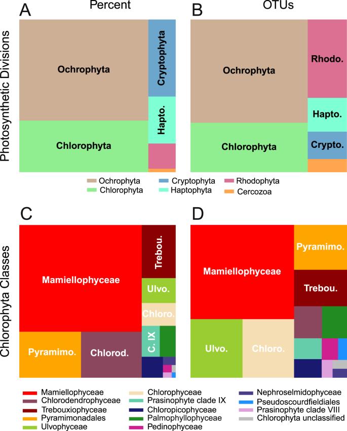 Green microalgae in marine coastal waters: The Ocean