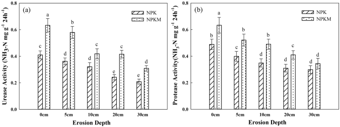 Responses of Labile Organic Nitrogen Fractions and Enzyme