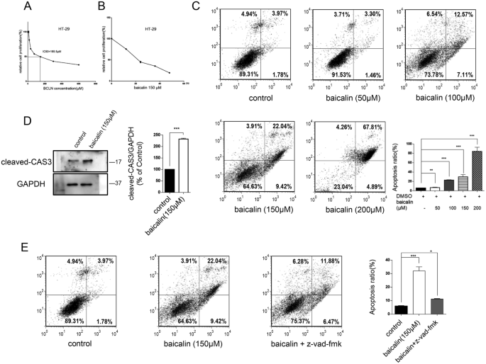 Baicalin The Major Component Of Traditional Chinese Medicine Scutellaria Baicalensis Induces Colon Cancer Cell Apoptosis Through Inhibition Of Oncomirnas Scientific Reports