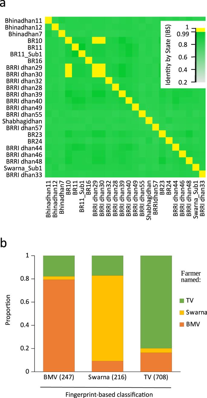 DNA fingerprinting at farm level maps rice biodiversity across