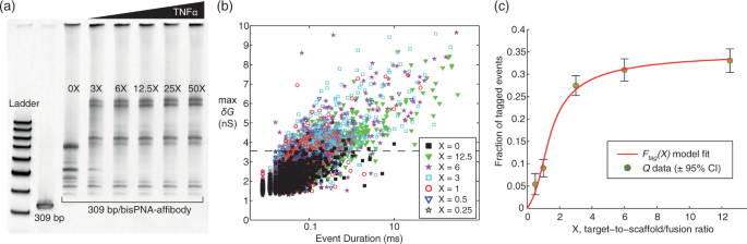 A handheld platform for target protein detection and quantification